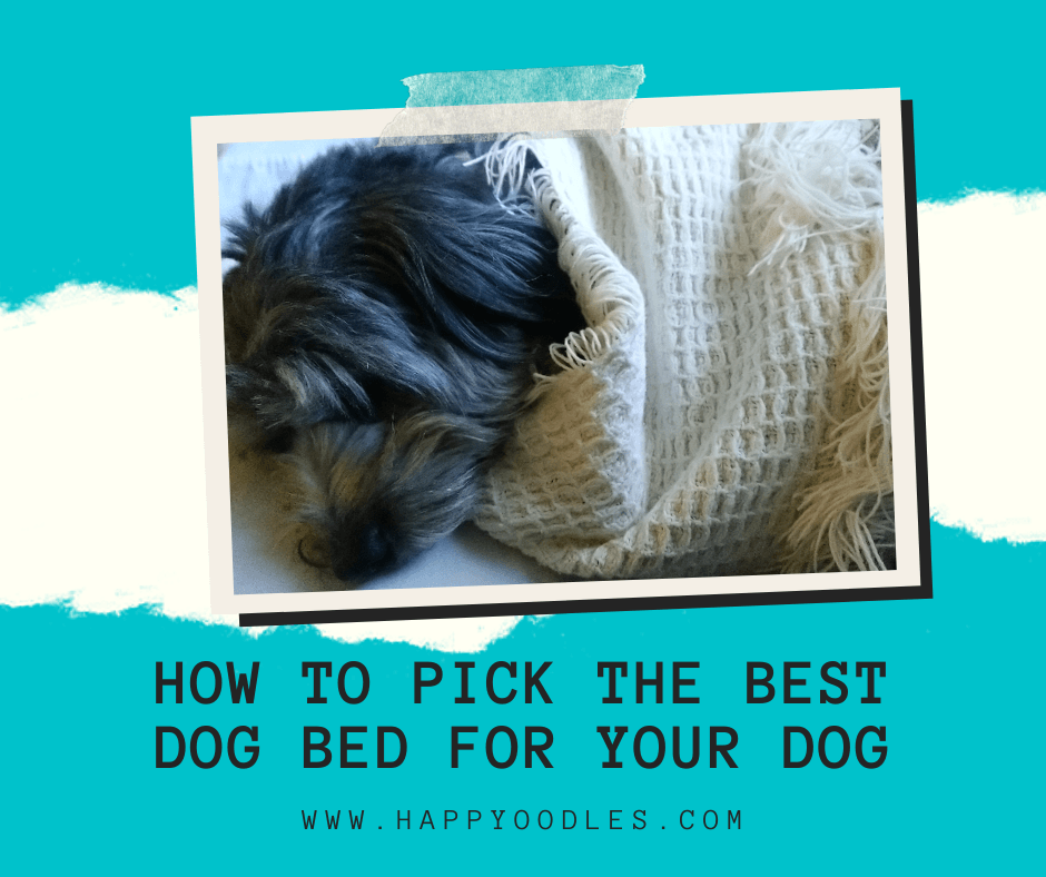 How to Pick the Best Dog Bed for Your Dog
