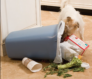 Puppy Proofing Your Home  -  10 Silent Dangers