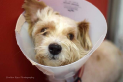 Common Pet Insurance Buying Mistakes