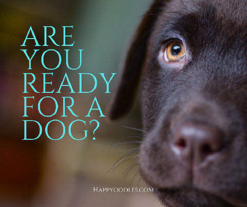 Are You Ready for a Dog ?