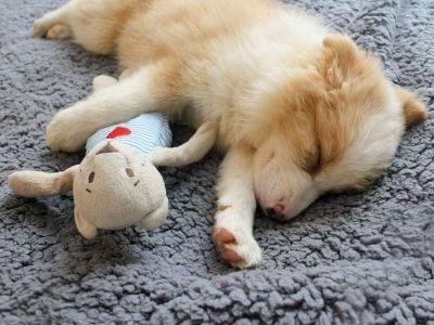 Puppy sleeping on fluffy blanket