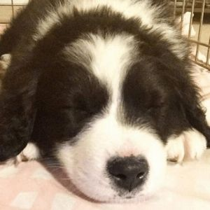 How to Crate Train a Puppy: 10 Mistakes to Avoid Puppy sleeping