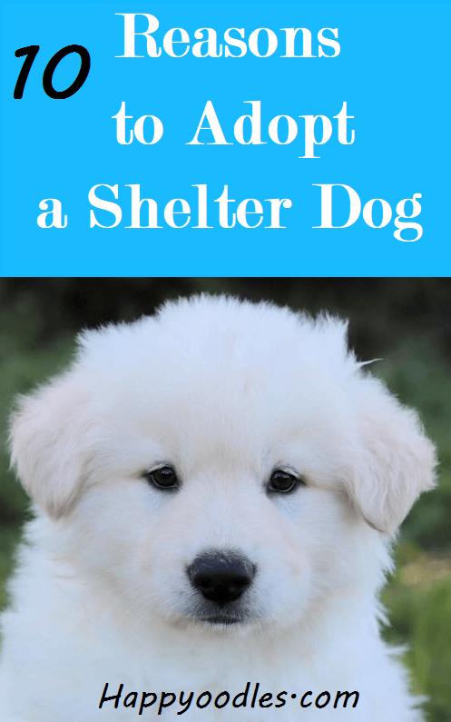 10 Reasons to Adopt a shelter Dog pin