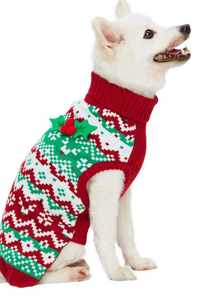 Mint green and red sweater on white dog