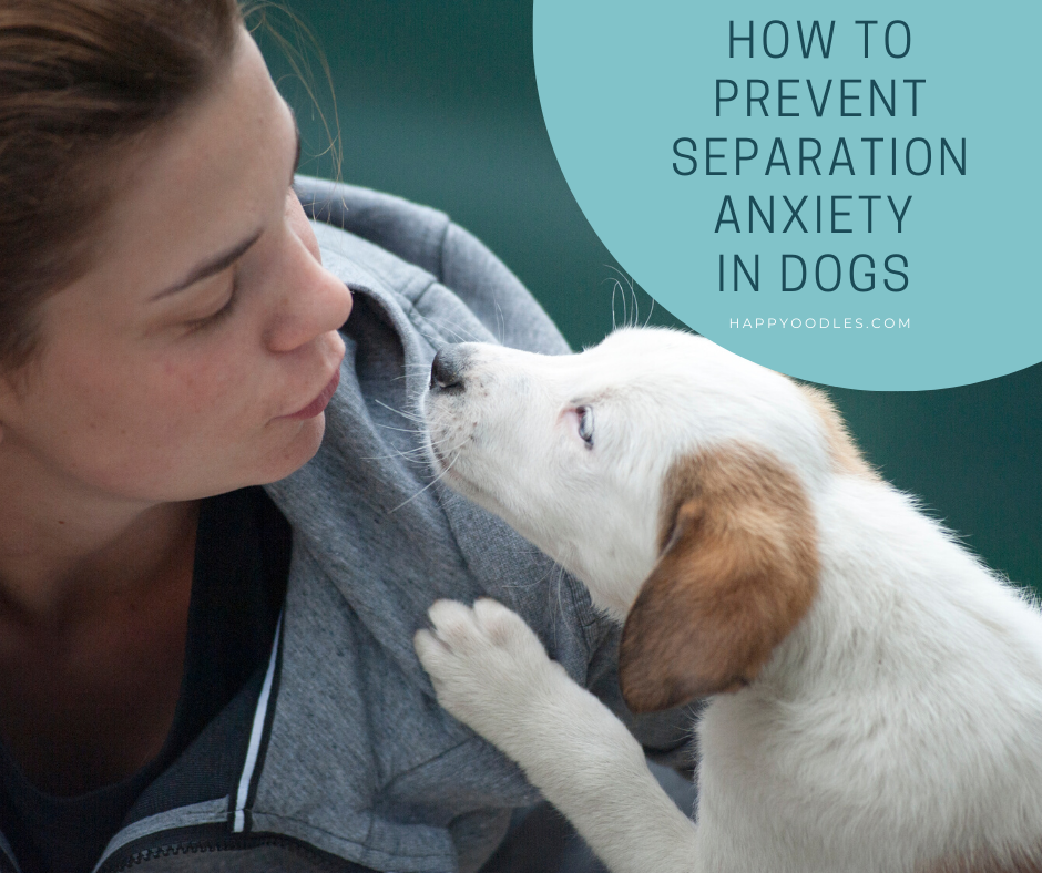 How to Prevent Separation Anxiety in Dogs