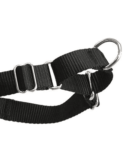 Easy Walk Harness martingale loop. Image is part of the post The Best Dog Harness for Doodles.