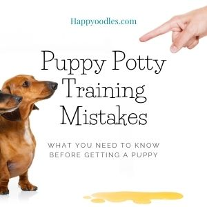 Puppy Potty Training Mistakes - Puppies with pee spot