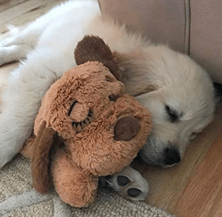 Puppy Crying in the Crate at Night? How to Make it Stop? Try the Snuggle Puppy.  Picture of puppy sleeping Snuggle Puppy Toy