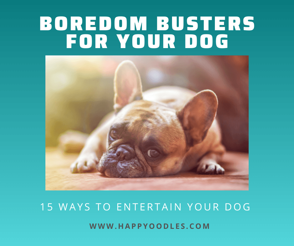 Boredom Busters for Dogs:  Ways to Entertain Your Dog