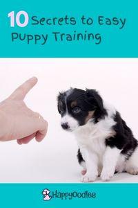10 Secrets of Easy Puppy training  - Happyoodles.com pinterest pin