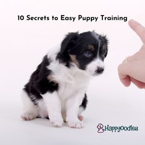 Puppy being trained