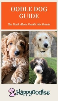 Oodle Dog Guide - What You Need to know Pin with three types of doodle dogs