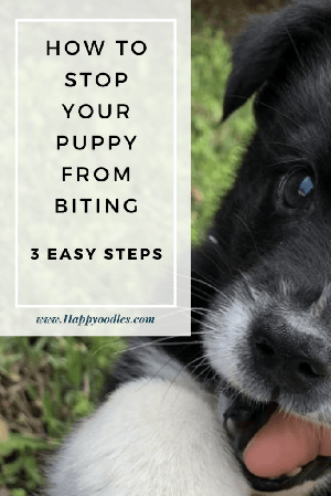 How to Stop a Puppy from Biting: Puppy biting a finger with title
