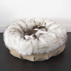 The Best Dog Beds Made in the USA 0 tan and cream Animals Matter Faux Fur Shag Puff dog bed with dog in the middles.