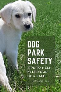 Dog Park Safety: Concerns and Tips
