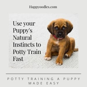 Potty Training a Puppy: Made Easy