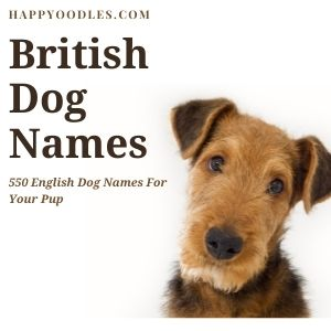 British Dog Names : 550 English Dog Names - title picture with terrier