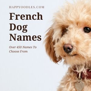 French Dog Names: Over 450 Names To Choose From