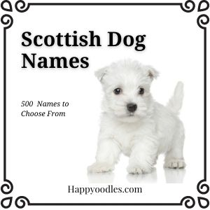 Scottish Dog Names: 500  Names to Choose From - title page with westie puppy