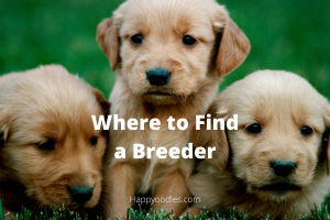 Where to Find a Reputable Dog Breeder