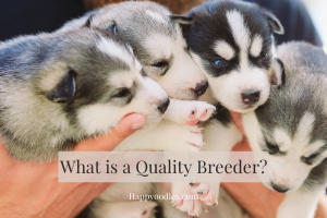 What is a Quality Breeder?