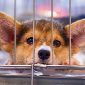 Tips to Stop a Puppy Crying in the Crate at Night. - Happyooldes,con