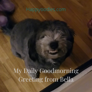Happyoodles.com Can a Dog Smile? Some Say No, But Mine Can- dog smiling, smiling dog