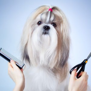 Groomed dog with comb