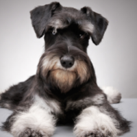 Black Dog Names: 450+ Names for Black Dogs