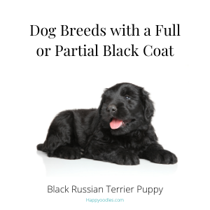 Dog Breeds with a full or partial black coat title page - Happyoodles.com Dog Names