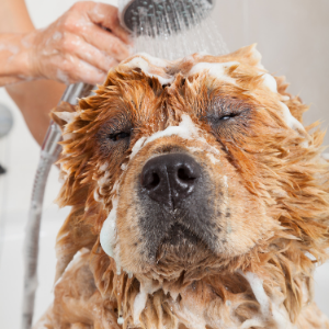 The Best Dog Groomer: How to Find One For Your Dog - Dog getting a bath