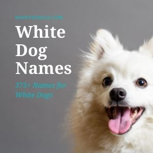 White Dog Names: 375+ Names for White Dogs