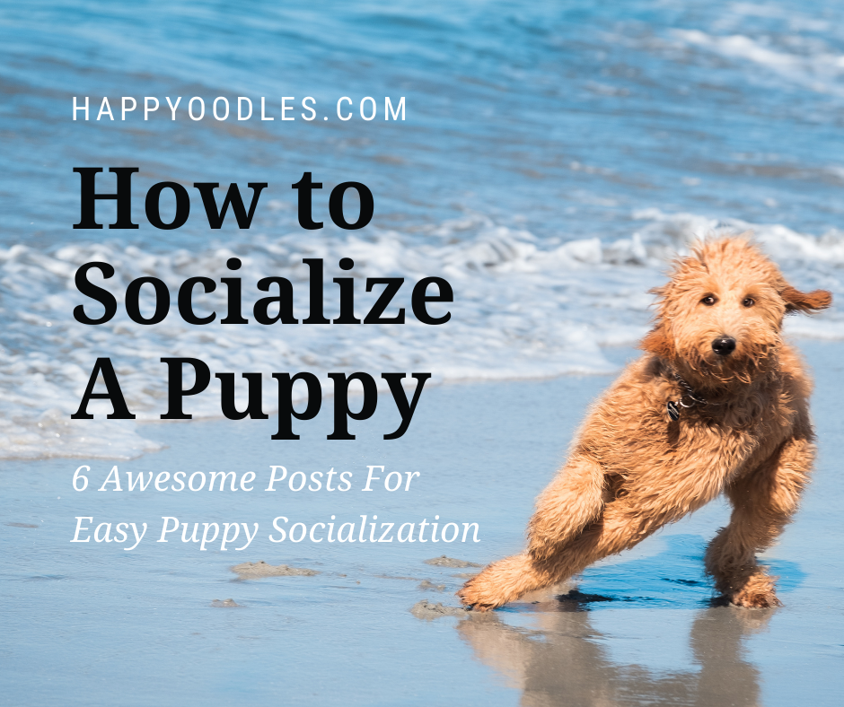 Happyoodles.com 6 Awesome Posts Geared For Easy Puppy Socialization