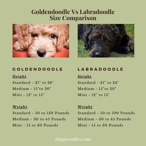 Goldendoodle vs Labradoodle Size Comparison