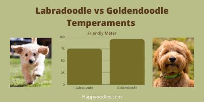 Labradoodle vs Goldendoodle: Temperament
