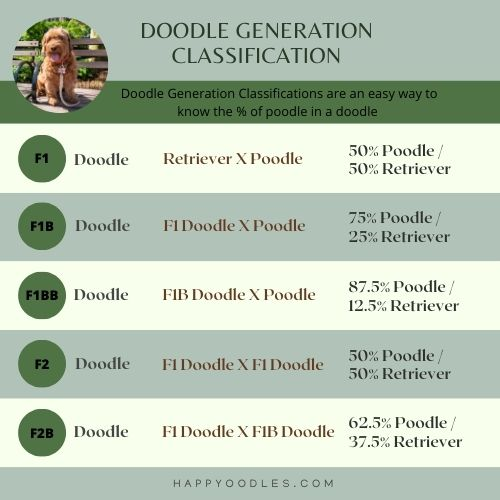 Doodle Classification Chart