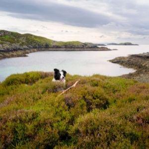 Border Collie in the Scottish Highlands