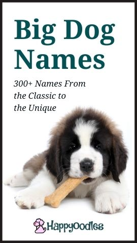 Big Dog Names: 300+ From the Classic to the Unique - Pinterest pin