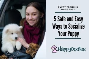 5 Safe and Easy Ways to Socialize your Puppy - Title picture