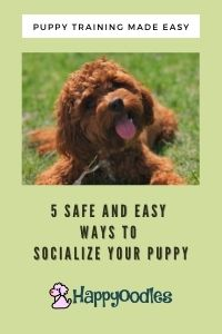 5 Safe and Easy Ways to Socialize your Puppy - Pin