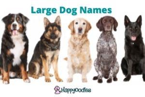 Large dog names title pic- Happyoodles.com