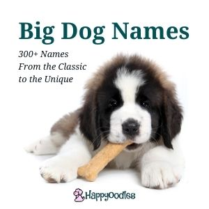 Big Dog Names: 300+ From the Classic to the Unique