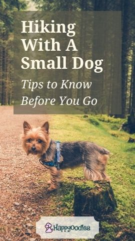 Tips for Hiking with Small Dogs - Pinterest pin