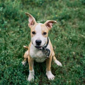 Puppy sitting in grass