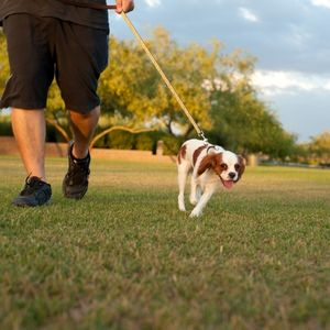 Potty Training a Puppy: Made Easy Puppy walking outside
