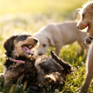 Puppies playing outside