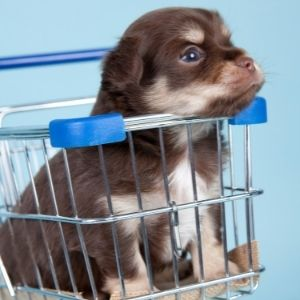 Puppy Socialization Mistakes: 10 Things to Avoid puppy in cart