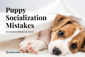 Puppy Socialization Mistakes: 10 Things to Avoid