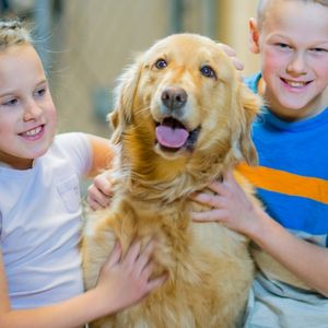 Where to Look for a Golden Retriever Rescue - Golden with two children Canva